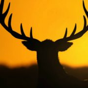 Широкие долины и густые леса theHunter: Call of the Wild