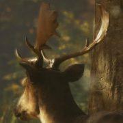 theHunter: Call of the Wild в течение года появится на PS4 и Xbox One
