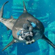 King Tide — «королевская битва» с водолазами и акулами